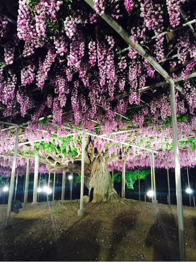 日本紫藤-休閒風長洋裝